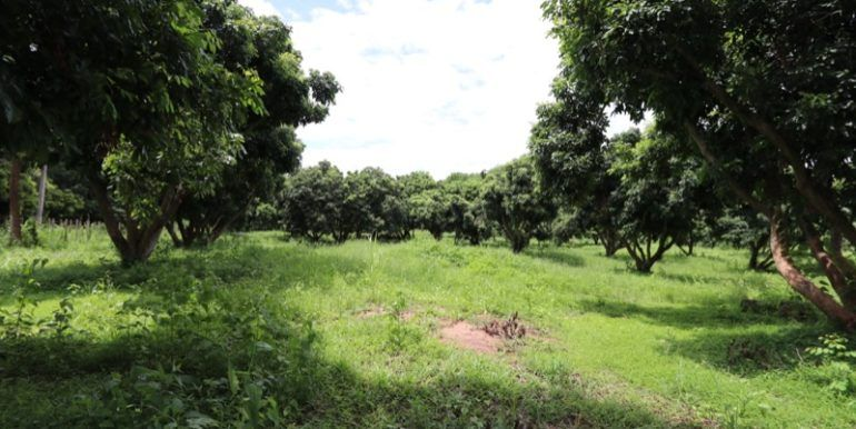Land for sale Chiang Mai-1